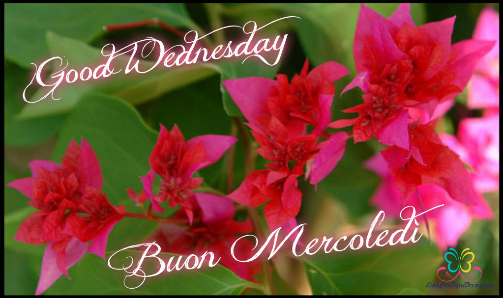 Good Wednesday ƹӝʒ Buon Mercoledì Link Per Ogni Occasione